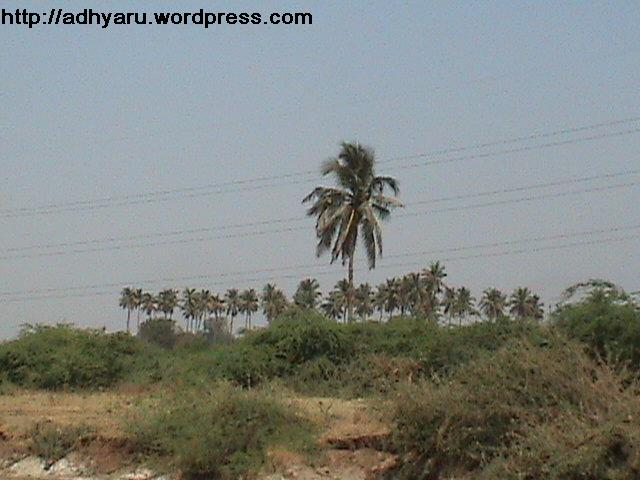 Gujarat Natural Beauty