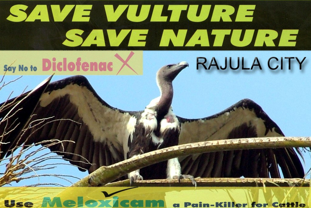 save vulture save nature
